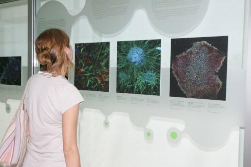 exposicio-i-cel-lules-mare-imatges-d-una-recerca-i-a-cosmocaixa-barcelona